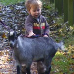 Henry with a baby goat at Staunton Country Park
